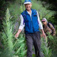 hike with Rob Gordon and Baiba, near Swansea - common mullein plant